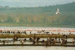 at Lake Nakuru National Park