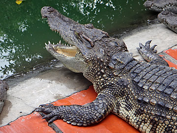 Mekong Crocodile Farm