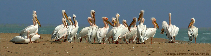The Silk Route - World Travel: Pelicans, Sandwich Harbour, Namibia