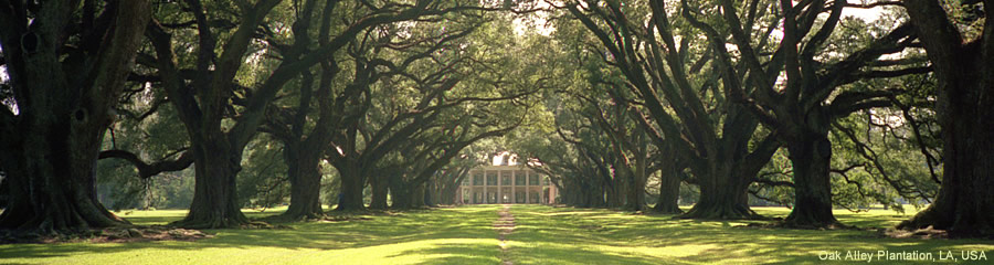 The Silk Route - World Travel: Oak Alley Plantation, LA, USA